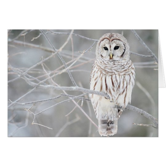 Beautiful White Snow Owl Design Card