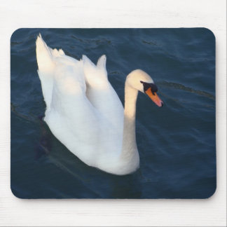 Beautiful White Swan - Mousepad