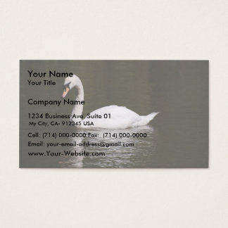 Beautiful White Swan Swimming In Lake Water Business Card