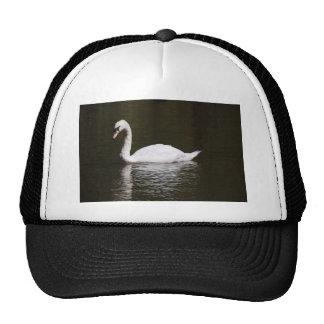 Beautiful White Swan Swimming In Lake Water Cap