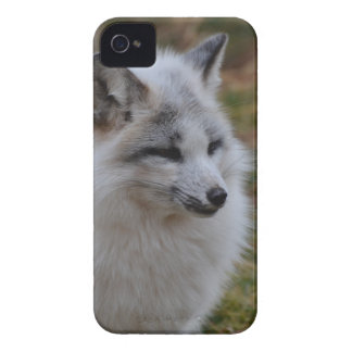 Beautiful White Swift Fox Case-Mate iPhone 4 Case