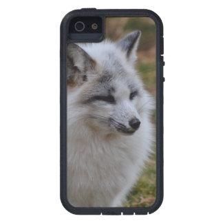Beautiful White Swift Fox iPhone 5 Cases