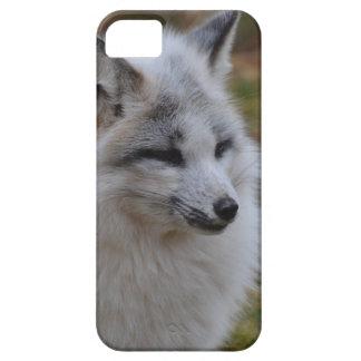 Beautiful White Swift Fox iPhone 5 Covers