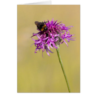 Beautiful white-tailed Bumblebee - Greeting Card