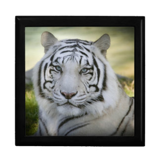 Beautiful White Tiger (v2) Gift Box