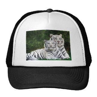 Beautiful White Tigers Hat