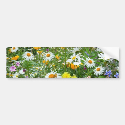 Beautiful Wildflower and Butterfly Meadow Bumper Stickers