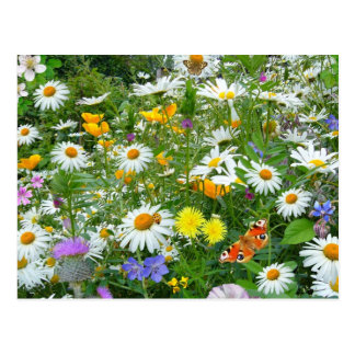 Beautiful Wildflower and Butterfly Meadow Postcard