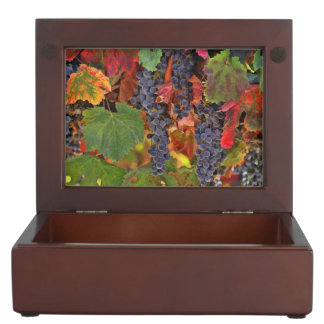 Beautiful Wine Vineyard Wood Box