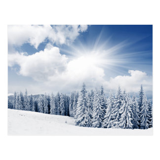 Beautiful Winter Landscape With Snow Postcard