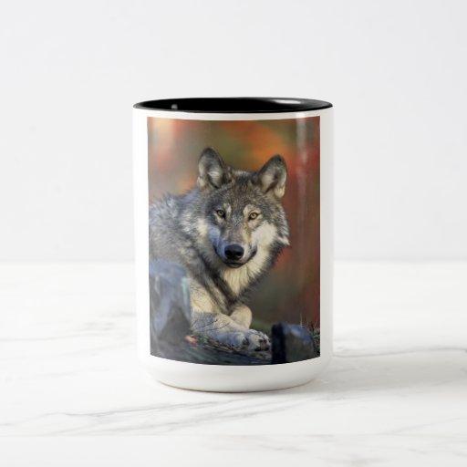 Beautiful Wolf Coffee Mugs Zazzle