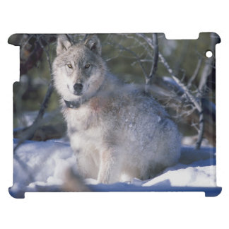 Beautiful Wolf in Snow iPad Case