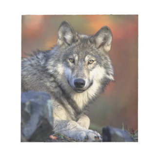 Beautiful Wolf Notepad