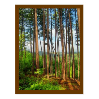 Beautiful Woods of Falls Creek Pa Postcard