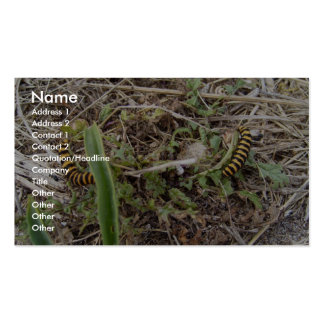 Beautiful Yellow And Black Worms In The Grass Pack Of Standard Business Cards
