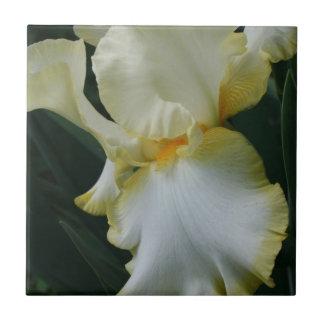 Beautiful Yellow and White Iris Tile