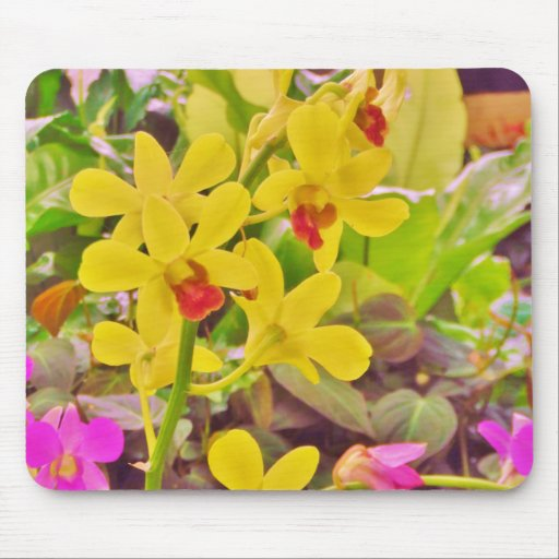 Beautiful Yellow autumn orchids Mouse Pad