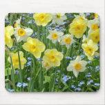 Beautiful yellow daffodil garden mouse pad