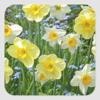 Beautiful yellow daffodil garden square sticker