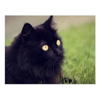 Beautiful Yellow Eyed Black Cat Postcard