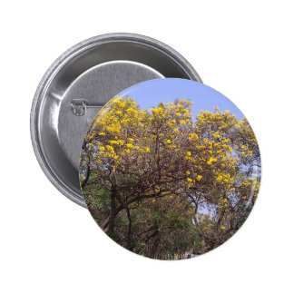 Beautiful yellow flowers in a garden 6 cm round badge