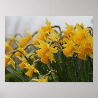 Beautiful yellow flowers poster