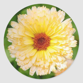 Beautiful Yellow Marigold Classic Round Sticker