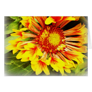 Beautiful Yellow-Orange Flower Greeting Card