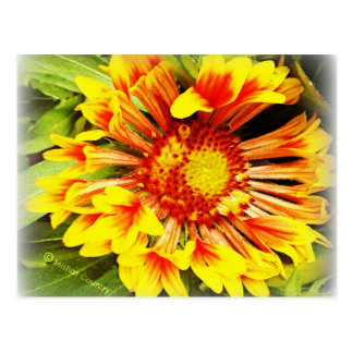 Beautiful Yellow-Orange Flower Postcard
