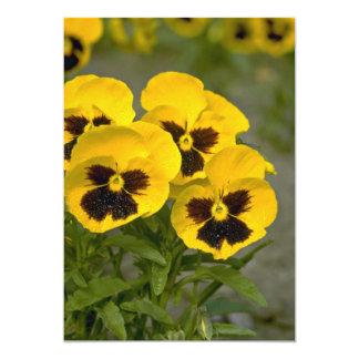 Beautiful yellow Pansies Card