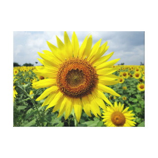 Beautiful yellow sunflower gallery wrapped canvas