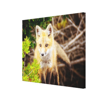 Beautiful Young Fox Kit On The Prowl Canvas Print