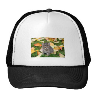 beautiful, young house kitten with autumn leaves cap
