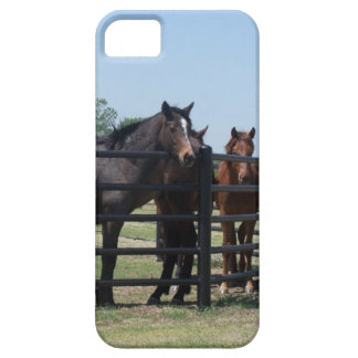 Beauty behind the fence iPhone 5 cases