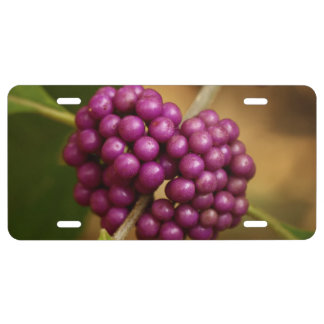 Beauty Berry License Plate