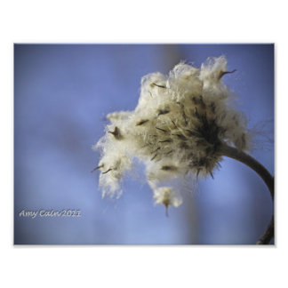 Beauty in Weeds Photograph