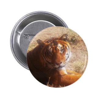 Beauty of the Beast Pinback Buttons