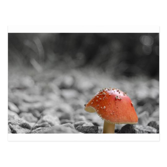 Beauty Shroom Postcard