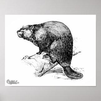 Beaver #1 print