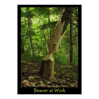 Beaver at Work Poster