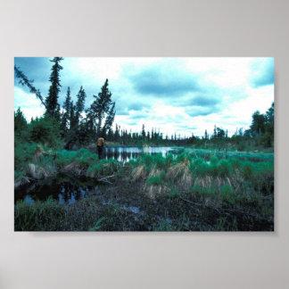 Beaver Dam and Pond Poster