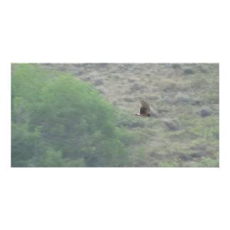 Beaver Dam Slough Fauna Birds Aves Animals Photo Greeting Card