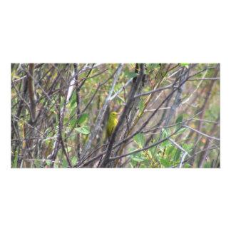 Beaver Dam Slough Fauna Birds Aves Animals Customized Photo Card