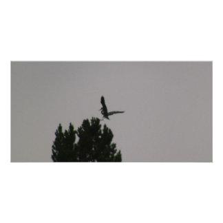 Beaver Dam Slough Fauna Birds Aves Animals Photo Cards