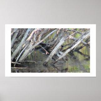 Beaver Dam Slough Fauna Birds Aves Animals Poster
