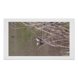 Beaver Dam Slough Fauna Birds Aves Animals Print