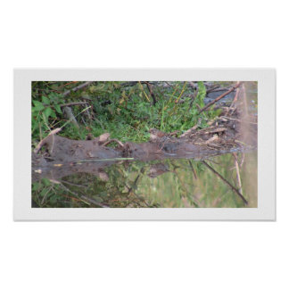 Beaver Dam Slough Fauna Birds Aves Animals Posters