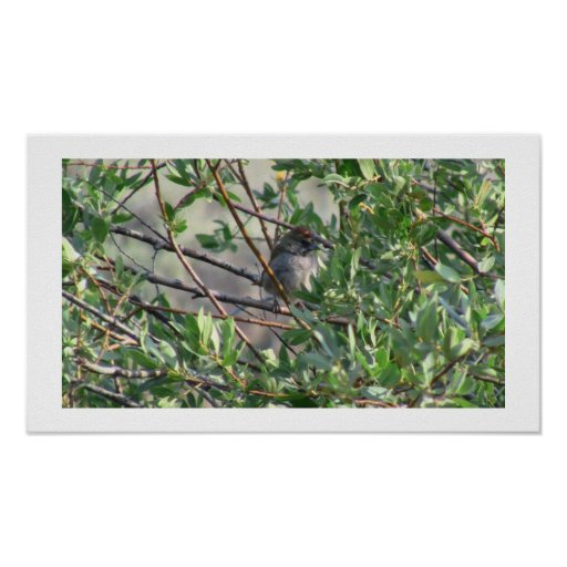 Beaver Dam Slough Fauna Birds Aves Animals Posters