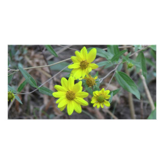 Beaver Dam Slough Flora Flowers Plants Botany Customized Photo Card
