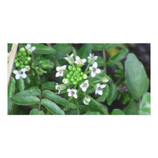 Beaver Dam Slough Flora Flowers Plants Botany Personalized Photo Card